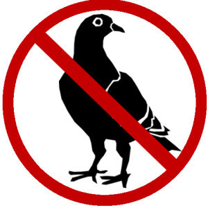Bird removal and control solutions in Hamilton.