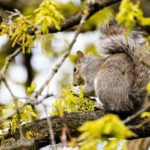 Reasons You Should Not Poison the Squirrels