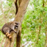 Rid Your Deck of Raccoons with These 4 Tactics
