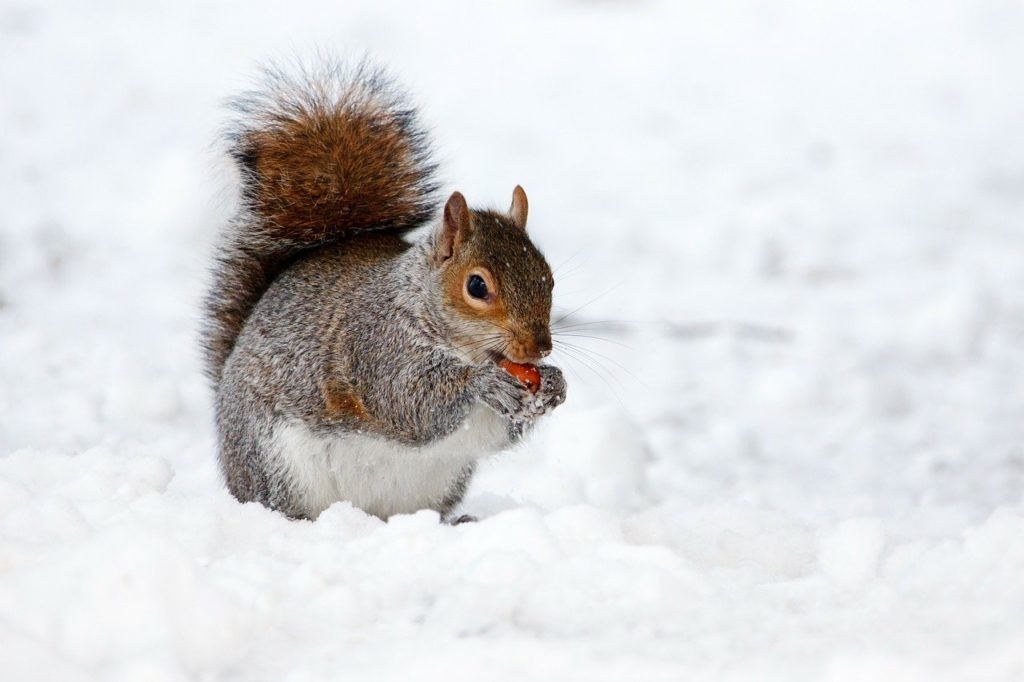 What Are The Eating Habits of Squirrels?