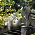 What Should You Not Feed Squirrels?