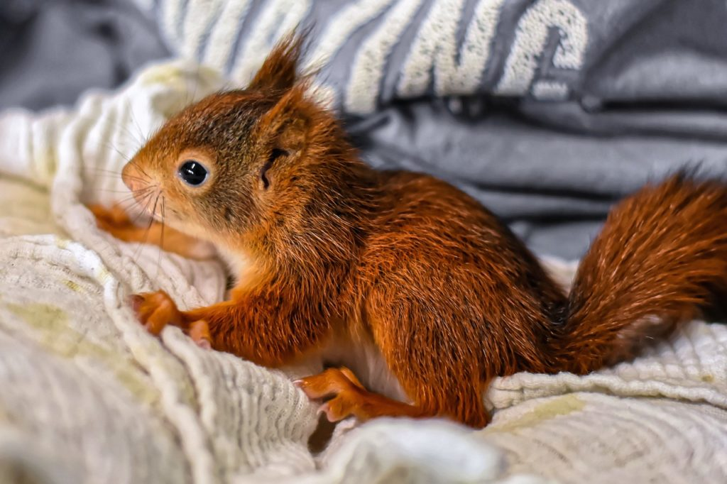 What You Need to Know about Baby Squirrel Season