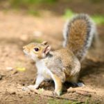 Why You Should Not Use DIY Trapping Methods for Squirrels