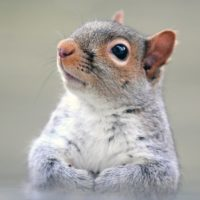 Why to Hire a Squirrel Removal Expert in Hamilton