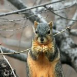 Squirrel Invasion and Health Concerns