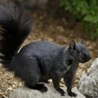 Is there any way you can squirrel-proof your attic?
