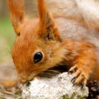 What Should I Do When I Hear Baby Squirrels?