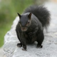 Signs that may show you have squirrels activity